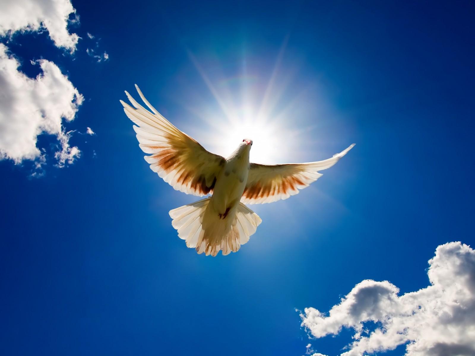 CNBB divulga Mensagem de Paz e Esperança para 2017